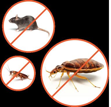препараты от всех видов паразитов